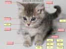 Anglická slovíčka - kotě
